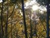 06_trees_sustainable
